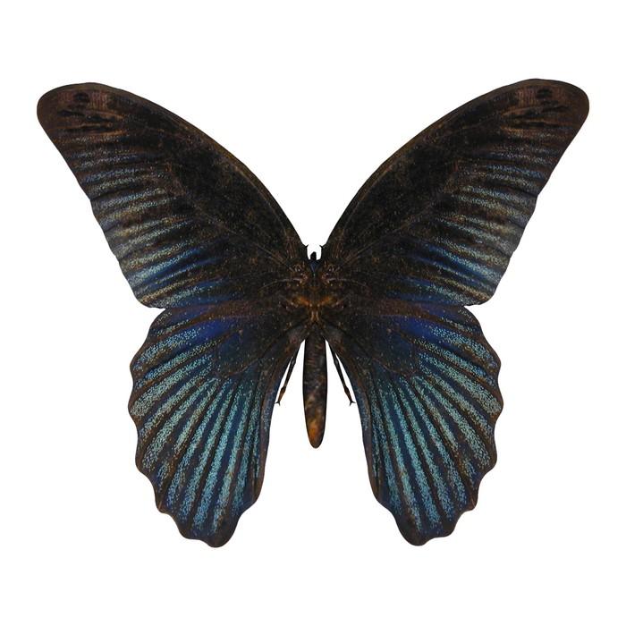 Sticker Pixerstick Bleu Swallowtail Butterfly - Paysages
