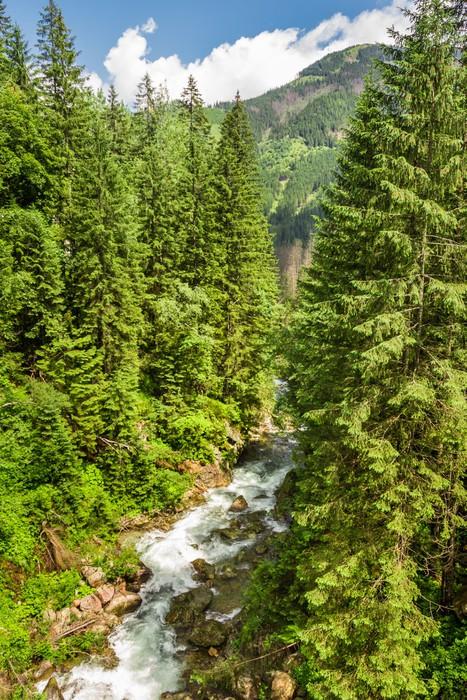 Vinylová Tapeta Horský potok v lese - Voda