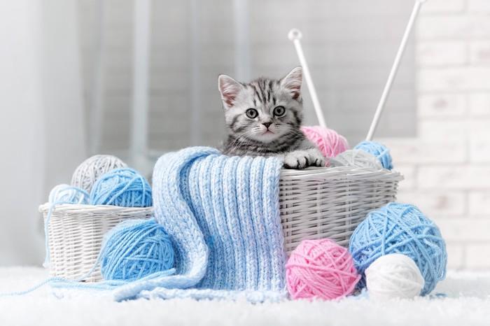 papier peint chaton dans un panier avec des pelotes de laine pixers nous vivons pour changer. Black Bedroom Furniture Sets. Home Design Ideas