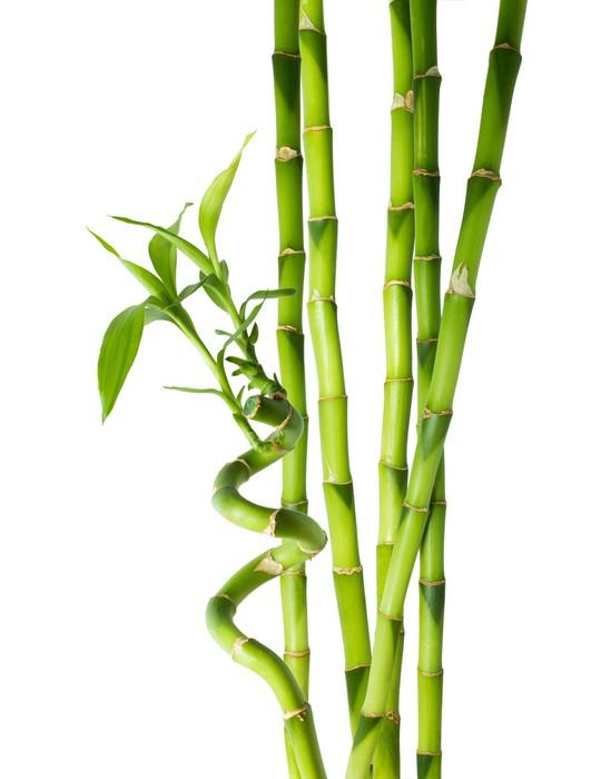 fototapete bambus sechs stiele pixers wir leben um zu ver ndern. Black Bedroom Furniture Sets. Home Design Ideas