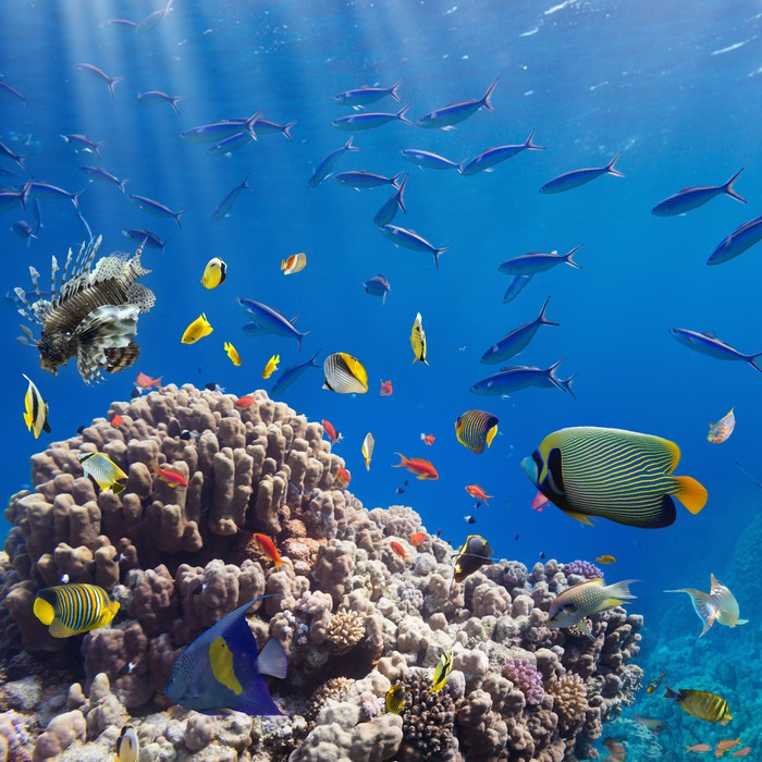 papier peint corail et poissons pixers nous vivons pour changer. Black Bedroom Furniture Sets. Home Design Ideas