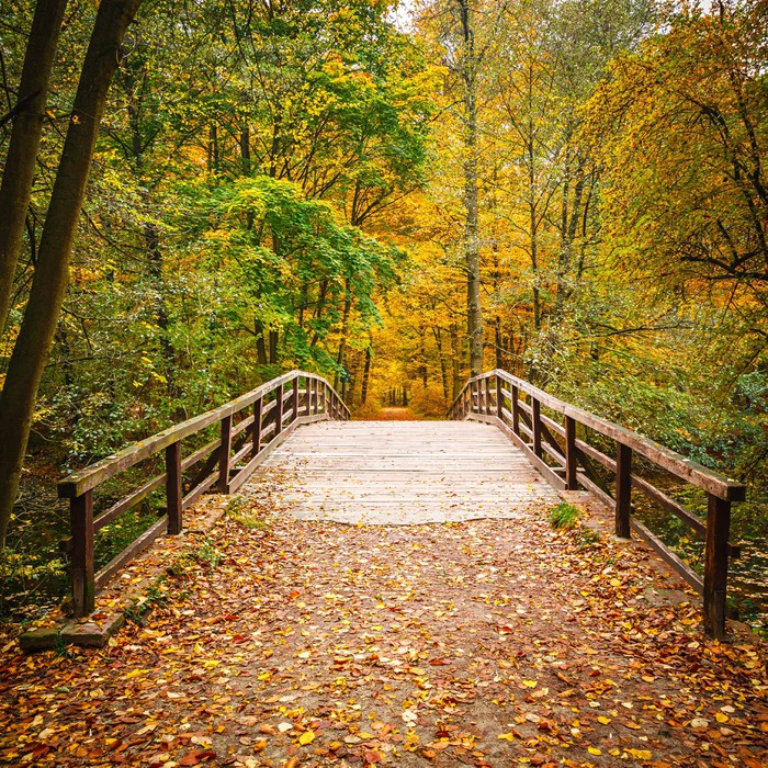 Bridge in autumn forest wall mural pixers we live to for Autumn forest mural