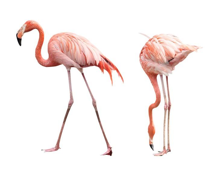 Veggklistremerke To flamingoer -
