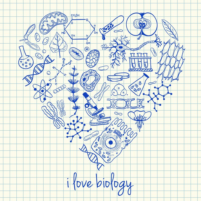 Fitness Biology: Biology Drawings In Heart Shape Wall Mural • Pixers® • We