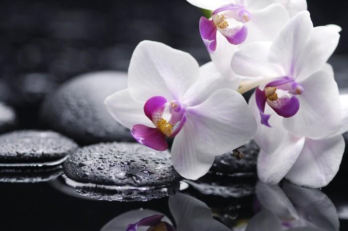 Vinylová Tapeta Větev Bílá orchidej květ a kámen s vodní kapky - Životní styl, péče o tělo a krása