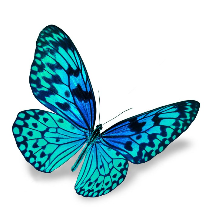 Blue Butterfly Sticker Pixers 174 We Live To Change