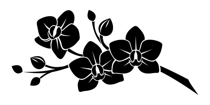 Black silhouette of orchid flowers vector illustration wall decal black silhouette of orchid flowers vector illustration wall decal mightylinksfo