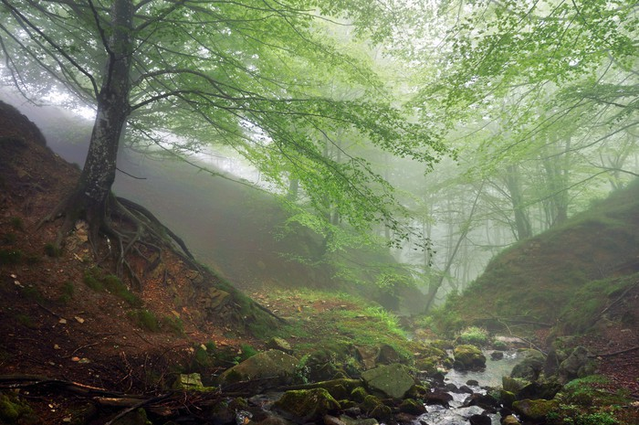 Vinylová Tapeta Lesa s mlhou a proudu - Lesy