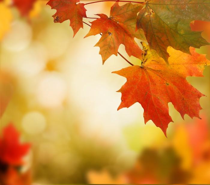 Vinylová Tapeta Podzimní pozadí - Roční období