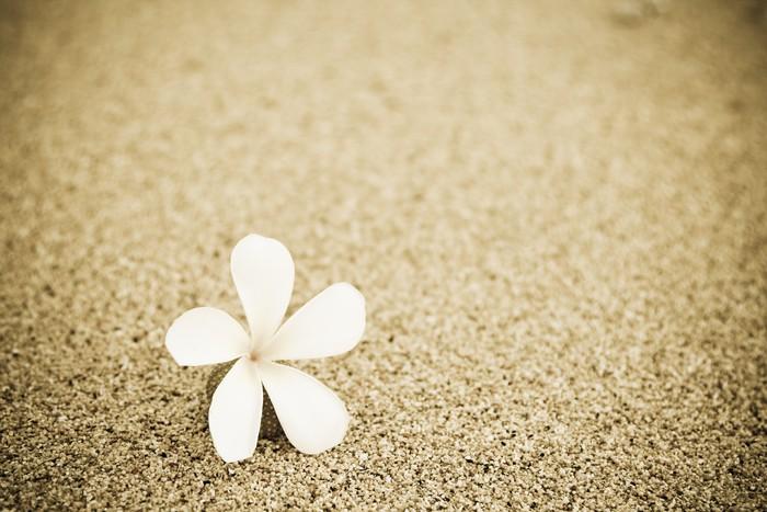Vinylová Tapeta Výstřel z jednoho květu na pláži - Květiny