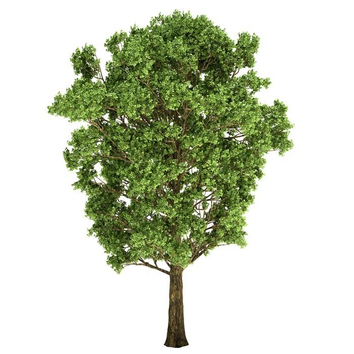 Nálepka Pixerstick Oak Tree Izolovaný - Roční období