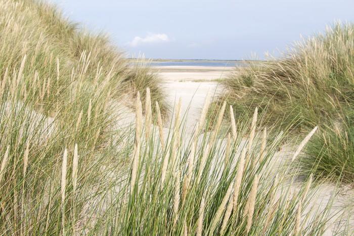 Carta da parati dune sabbiose nei paesi bassi pixers for Carta da parati prezzi bassi