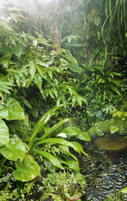 rainforest background wall mural pixers we live to change
