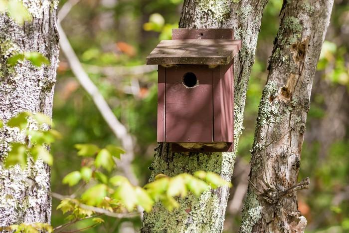 sticker une vieille maison d 39 oiseau brun peint sur un arbre pixers nous vivons pour changer. Black Bedroom Furniture Sets. Home Design Ideas