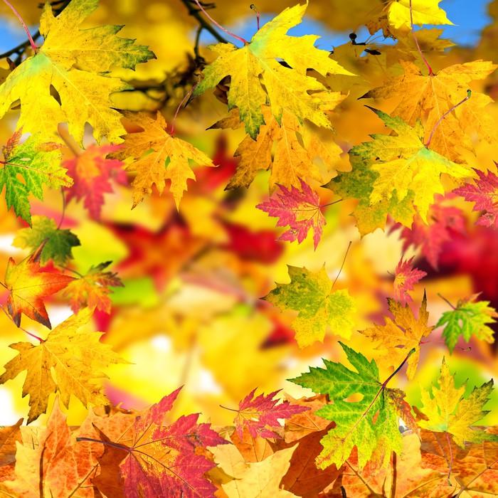 Vinylová fototapeta Podzimní karta s barevnými listy - Vinylová fototapeta
