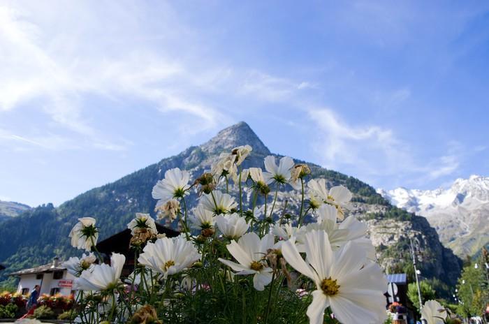 Vinylová Tapeta Fiori binachi su sfondo monte e cielo - Květiny