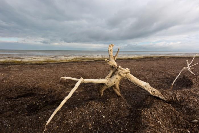 Vinylová Tapeta Starý strom na mrtvého moře - Stromy