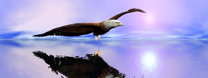 Vinylová Tapeta Americký orel bělohlavý - 3D render - Témata