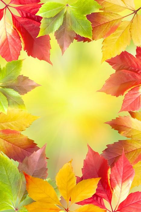 Vinylová fototapeta Podzimní listí rám - Vinylová fototapeta