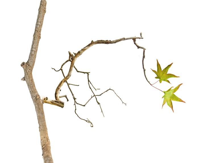tableau sur toile branche avec feuilles pixers nous vivons pour changer. Black Bedroom Furniture Sets. Home Design Ideas