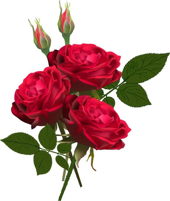 fototapete drei rote rosen haufen isoliert auf wei. Black Bedroom Furniture Sets. Home Design Ideas