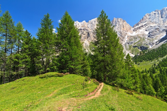 Vinylová Tapeta Alpské krajiny v údolí Contrin - Evropa