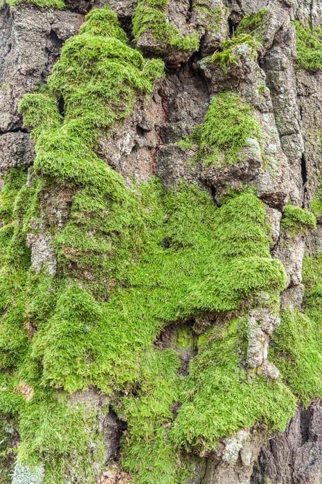 Plakát Textura mech na stromě - Struktury