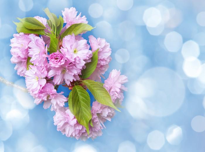 Vinylová Tapeta Větve sakury, květiny - modré nebe - Roční období