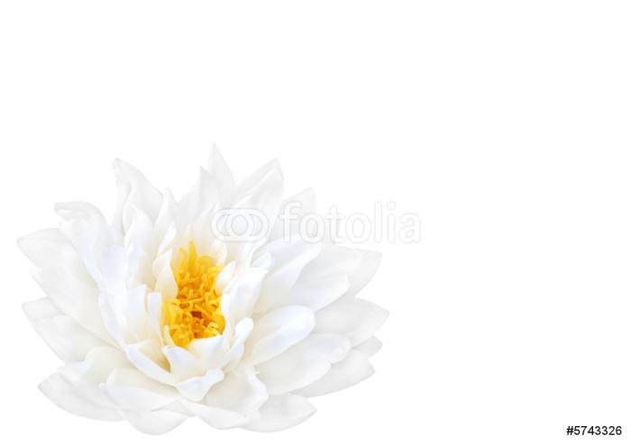Vinylová Tapeta White Lotus krása - Květiny