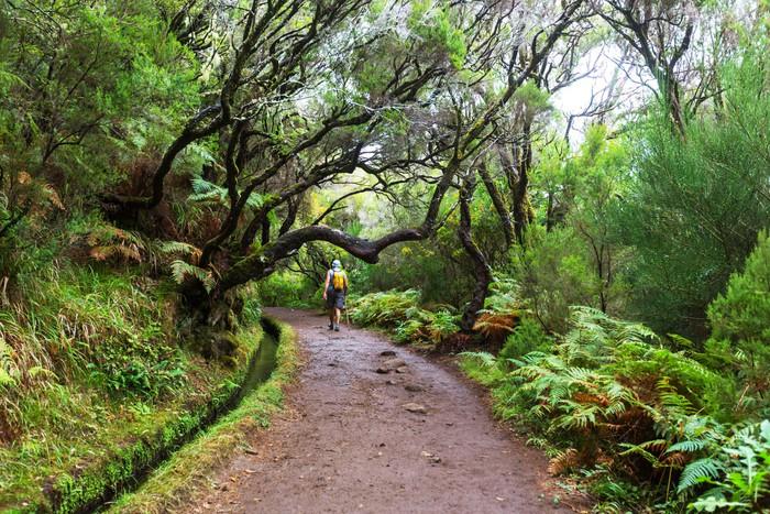 Vinylová Tapeta Výlet na Madeiru - Příroda a divočina