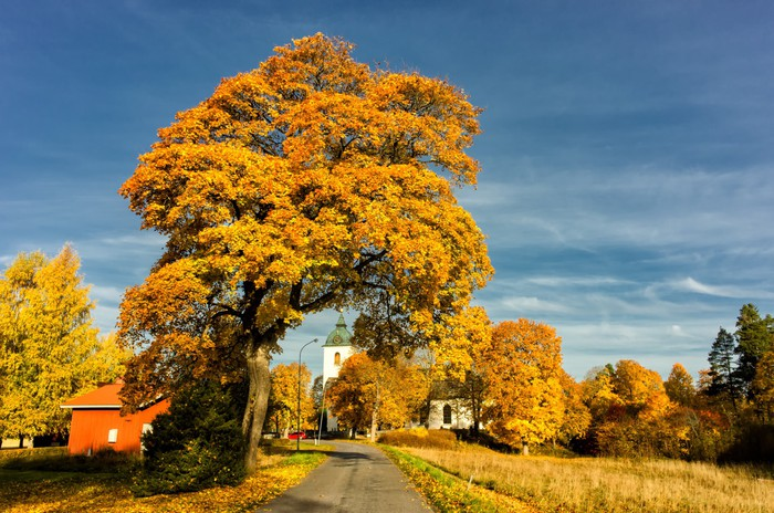 Vinylová Tapeta Podzim v Svennevad v blízkosti středu Švédska - Evropa