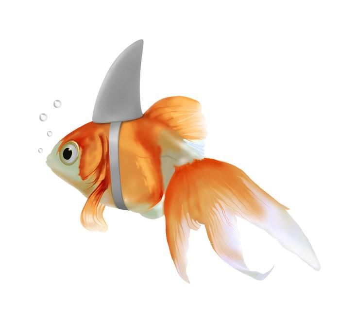 papier peint poisson rouge requin pixers nous vivons pour changer. Black Bedroom Furniture Sets. Home Design Ideas