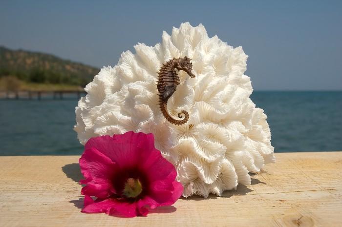 Vinylová Tapeta Korál, mořský koník a tropické květiny v blízkosti oceánu - Prázdniny