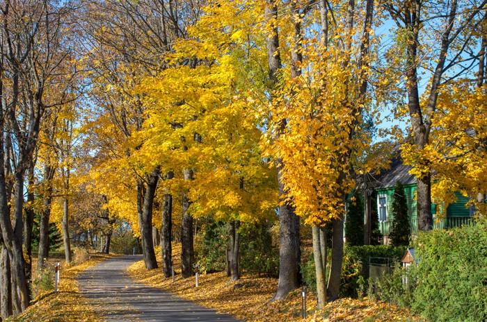 Vinylová Tapeta Barevné podzimní stromy na silnici Litva obce - Město