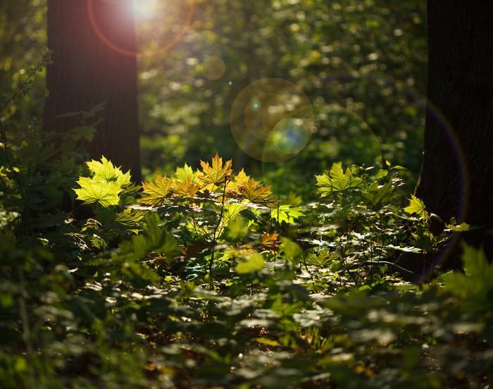 Vinylová Tapeta Sluneční světlo v lese podrost - Roční období