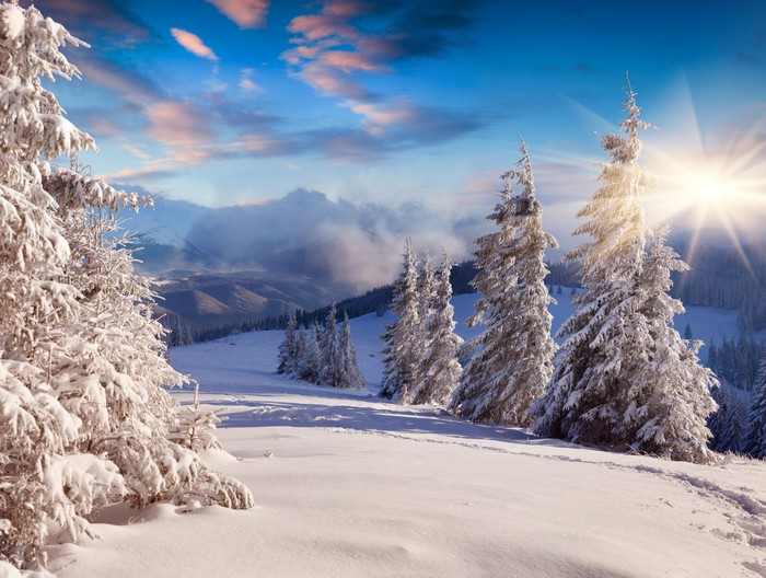 Vinylová Tapeta Krásné zimní sinrise sněhem pokryté stromy. - Styly