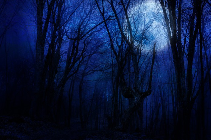 dark night forest agaist full moon wall mural pixers we live to