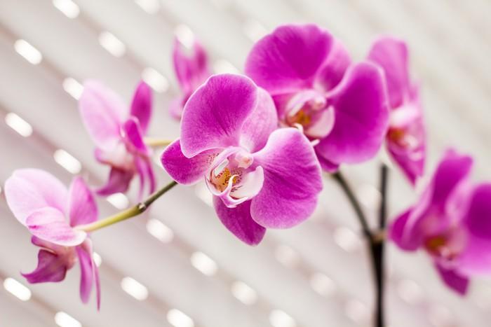 fototapete violetten orchidee pixers wir leben um zu ver ndern. Black Bedroom Furniture Sets. Home Design Ideas