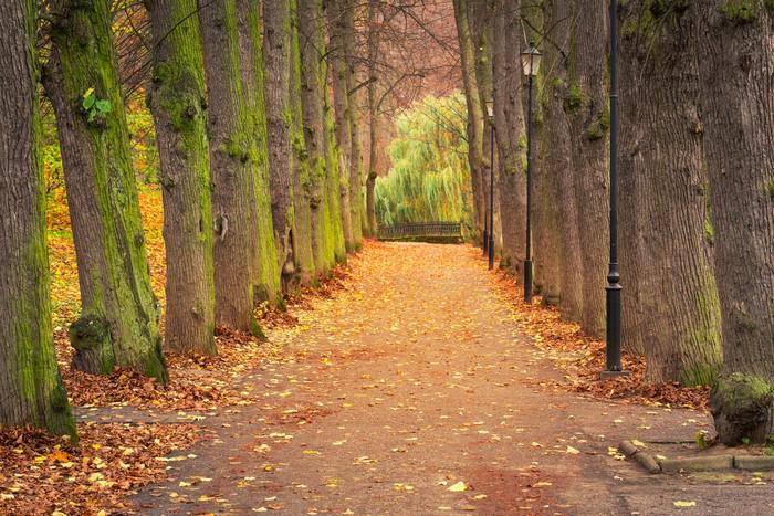 Vinylová Tapeta Podzimní alej v parku, v Polsku - Témata