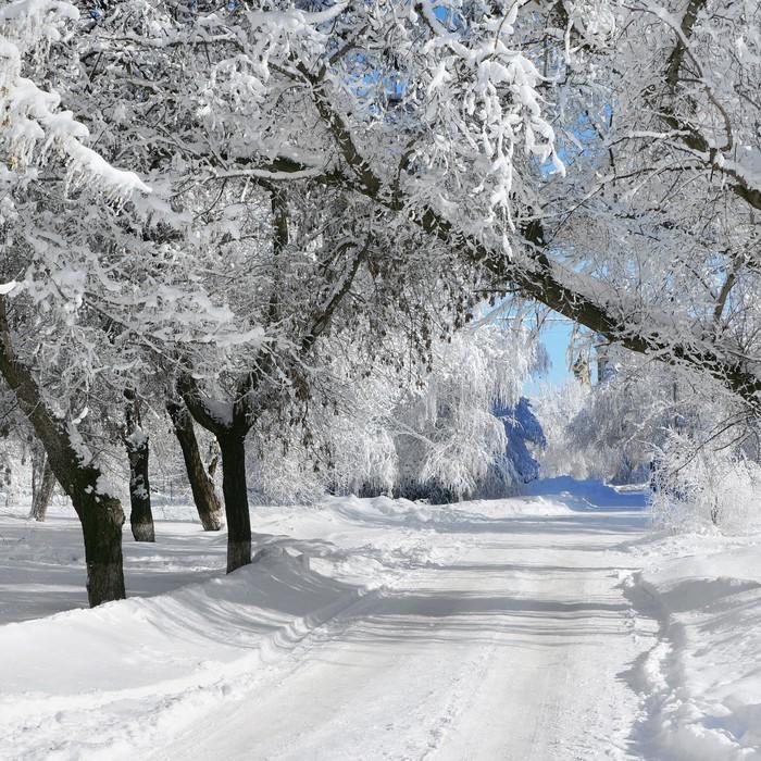 fototapete winter park landschaft pixers wir leben. Black Bedroom Furniture Sets. Home Design Ideas