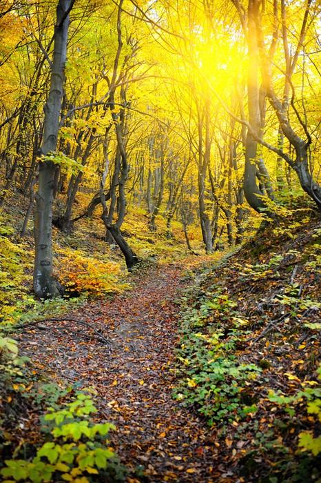 Vinylová Tapeta Podzimní les - Outdoorové sporty