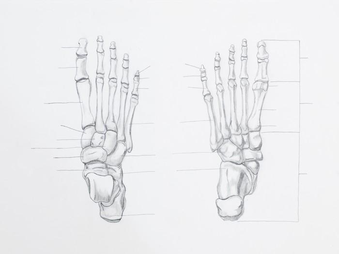 Carta da parati particolare del piede ossa disegno a for Carta da parati particolare