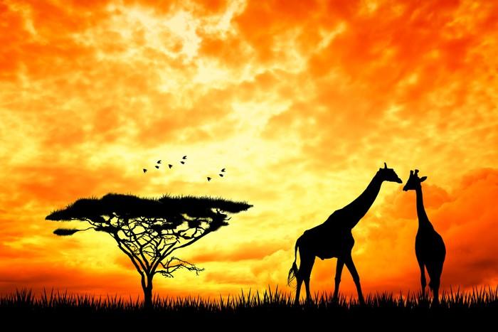 Papel pintado jirafa en el paisaje africano pixers - Papeles pintados paisajes ...