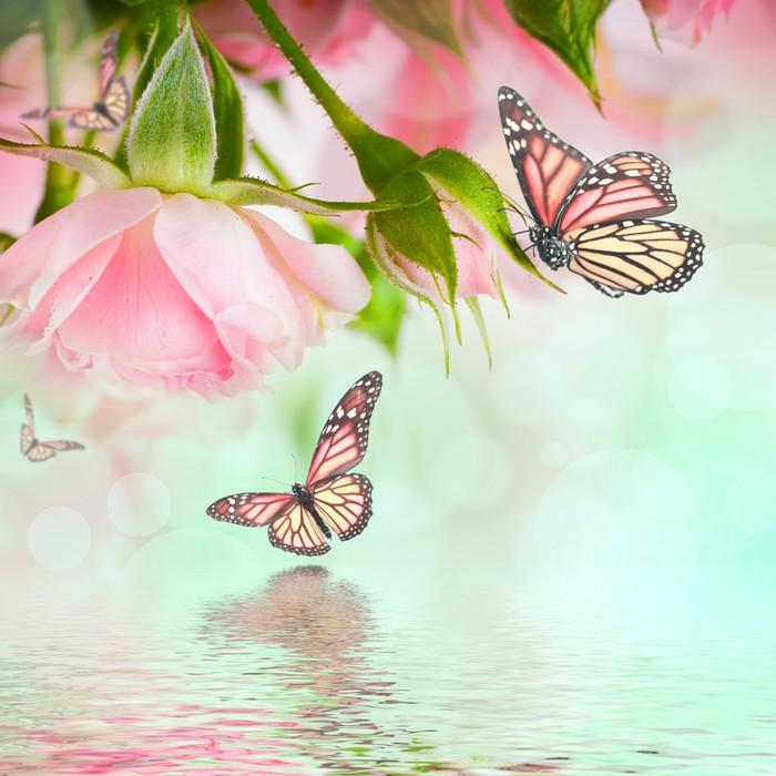 Vinylová Tapeta Krásné růže a motýl, květina, květinové pozadí - Témata