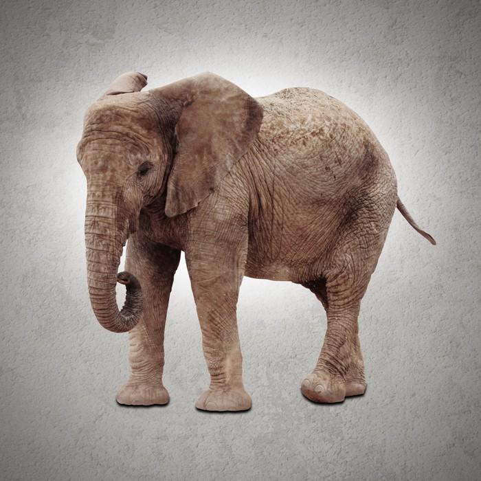 Poster African elephant - Themen