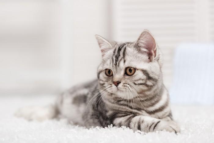 Leinwandbild Die Katze auf dem Teppich - Themen