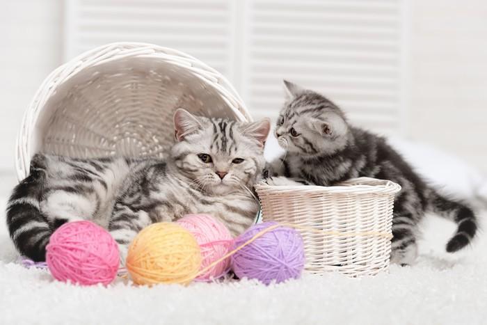 papier peint deux chats dans un panier avec des pelotes de laine pixers nous vivons pour. Black Bedroom Furniture Sets. Home Design Ideas