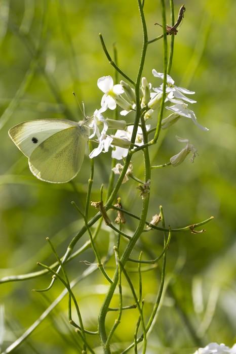 Vinylová Tapeta Wild Butterfly - Příroda a divočina