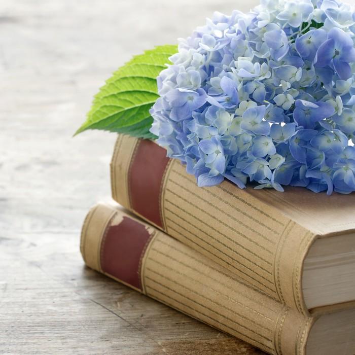 Vinylová Tapeta Staré knihy s romantickými modrými květy - Vzdělávání