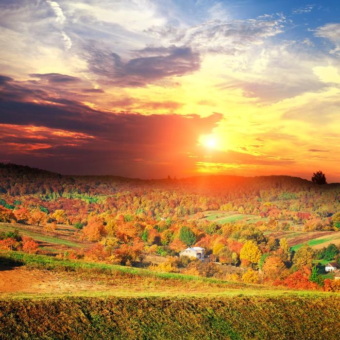 Vinylová Tapeta Bautiful žluté podzimní krajina s lesem - Pozadí